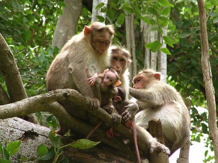 Tama guna monkey