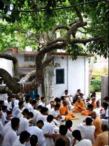 Siddha Bakul Tree